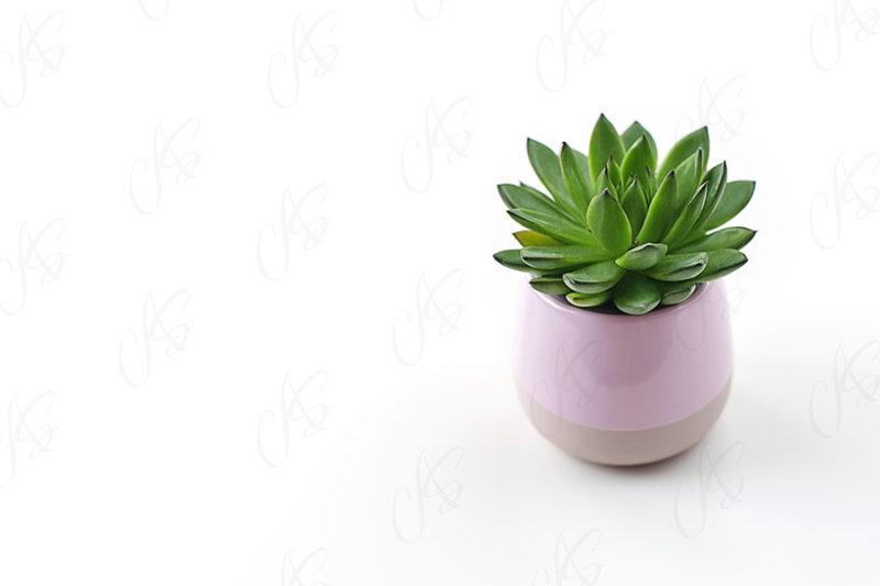 mockup-biale-biurko-kwiatek-95