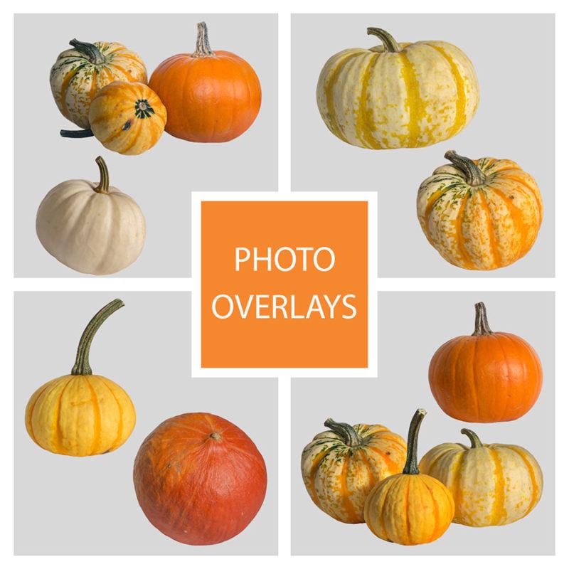 dynie-halloween-pomaranczowe-biala-nakladki-fotograficzne-photoshop-psd-png-edycja-zdjec-1