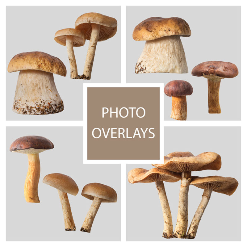 grzyby-lesne-nakladki-fotograficzne-photoshop-psd-png-edycja-zdjec-1