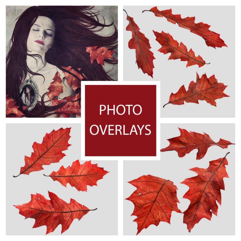 jesien-liscie-spadajace-czerwone-nakladki-fotograficzne-photoshop-edycja-zdjec-1