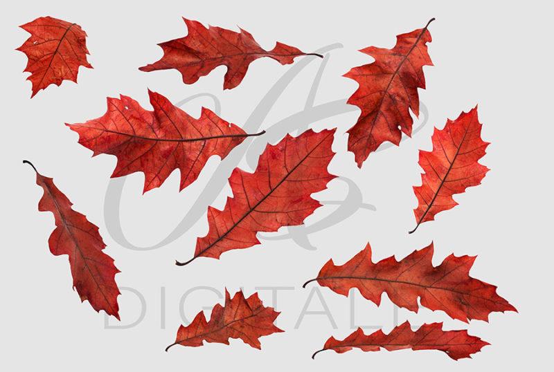 jesien-liscie-spadajace-czerwone-nakladki-fotograficzne-photoshop-edycja-zdjec-2