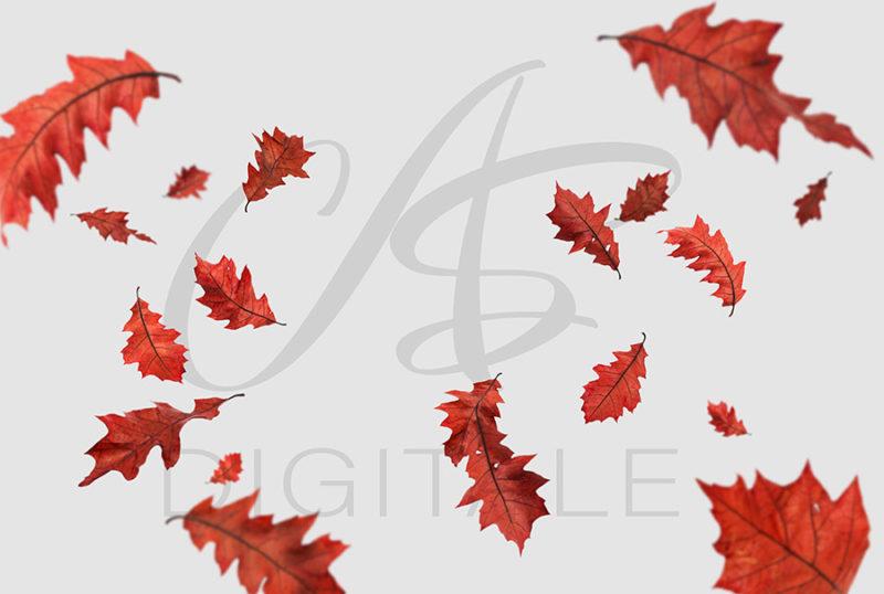 jesien-liscie-spadajace-czerwone-nakladki-fotograficzne-photoshop-edycja-zdjec-3