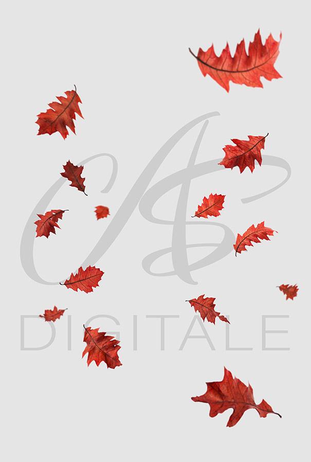 jesien-liscie-spadajace-czerwone-nakladki-fotograficzne-photoshop-edycja-zdjec-4