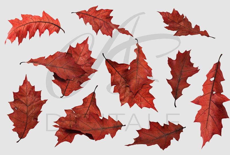 jesien-liscie-spadajace-czerwone-nakladki-fotograficzne-photoshop-edycja-zdjec-5