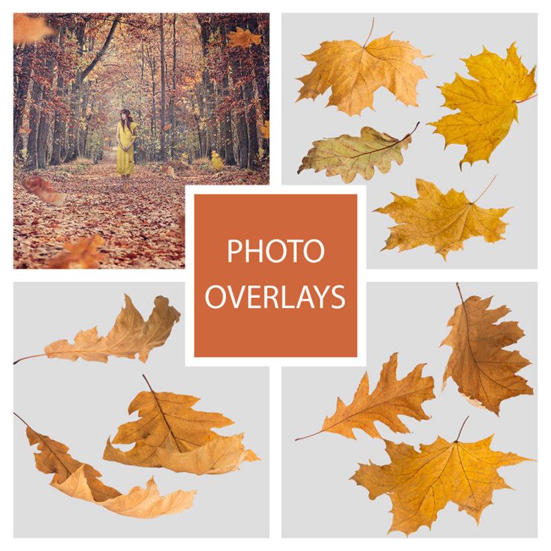 jesien-liscie-spadajace-kolorowe-nakladki-fotograficzne-photoshop-edycja-zdjec-1
