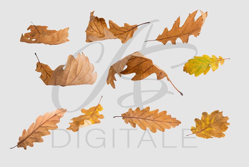 jesien-liscie-spadajace-kolorowe-nakladki-fotograficzne-photoshop-edycja-zdjec-2