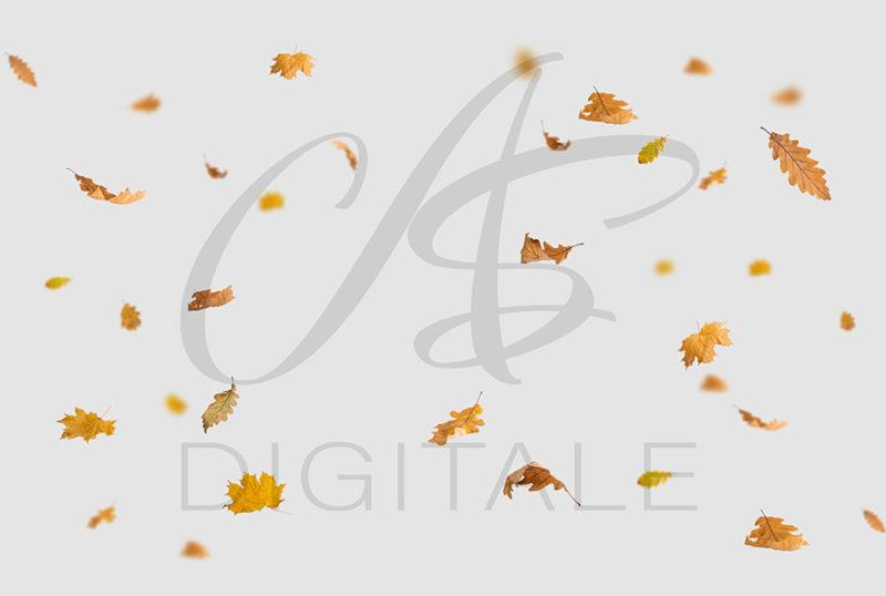 jesien-liscie-spadajace-kolorowe-nakladki-fotograficzne-photoshop-edycja-zdjec-3