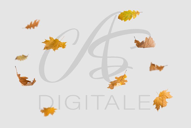 jesien-liscie-spadajace-kolorowe-nakladki-fotograficzne-photoshop-edycja-zdjec-4