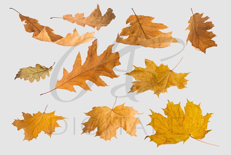 jesien-liscie-spadajace-kolorowe-nakladki-fotograficzne-photoshop-edycja-zdjec-5