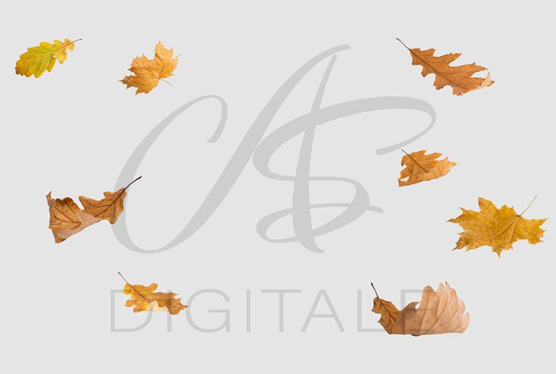 jesien-liscie-spadajace-kolorowe-nakladki-fotograficzne-photoshop-edycja-zdjec-6