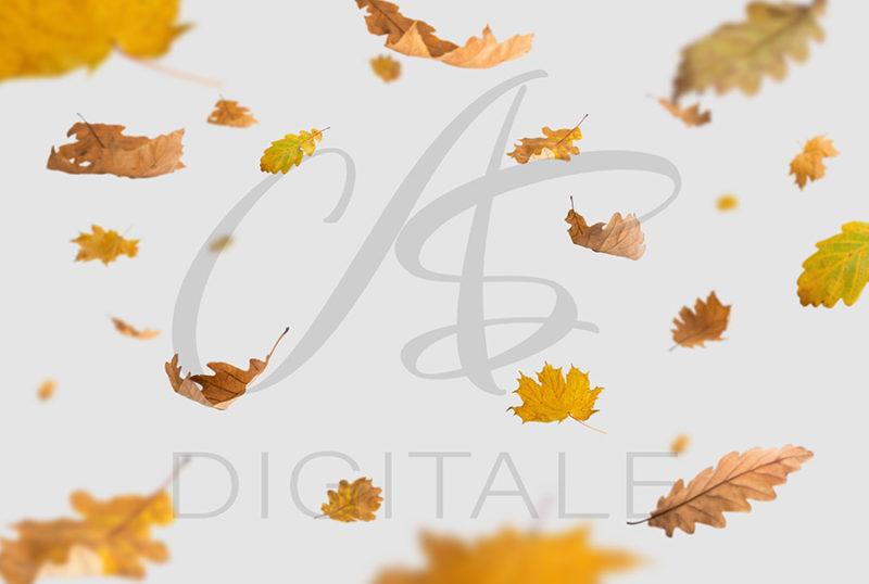 jesien-liscie-spadajace-kolorowe-nakladki-fotograficzne-photoshop-edycja-zdjec7