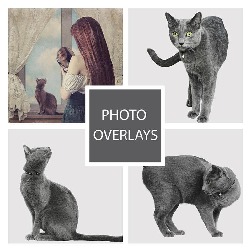 kot-czarny-nakladki-fotograficzne-photoshop-edycja-zdjec-1