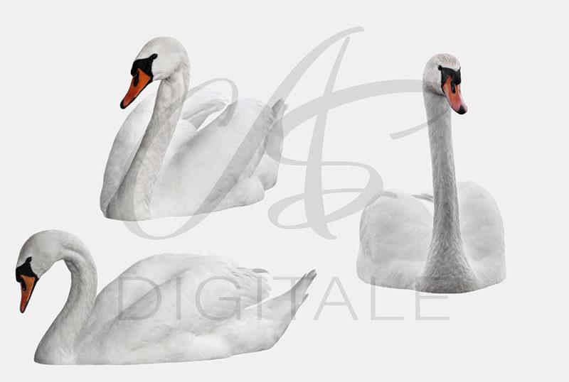 labedzie-biale-nakladki-fotograficzne-photoshop-edycja-zdjec-2