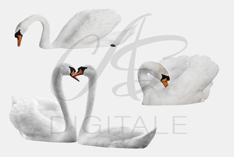 labedzie-biale-nakladki-fotograficzne-photoshop-edycja-zdjec-3