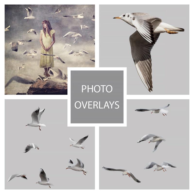 mewy-w-locie-morze-nakladki-fotograficzne-photoshop-psd-png-edycja-zdjec-1
