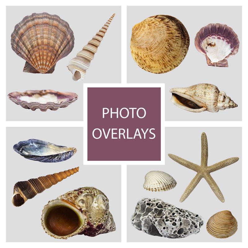 muszle-morskie-ocean-kolorowe-nakladki-fotograficzne-photoshop-edycja-zdjec-1