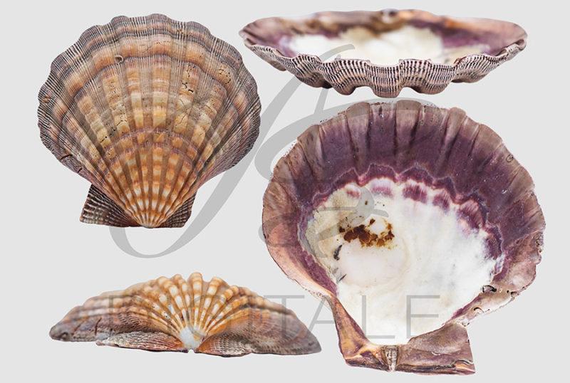 muszle-morskie-ocean-kolorowe-nakladki-fotograficzne-photoshop-edycja-zdjec-2