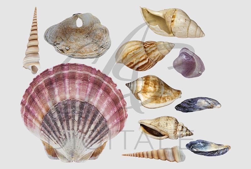 muszle-morskie-ocean-kolorowe-nakladki-fotograficzne-photoshop-edycja-zdjec-3