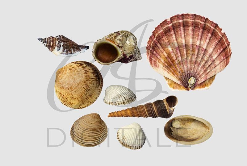 muszle-morskie-ocean-kolorowe-nakladki-fotograficzne-photoshop-edycja-zdjec-4
