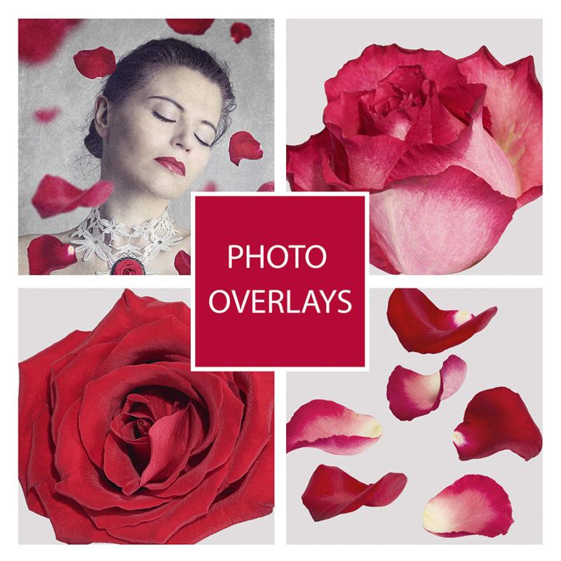 platki-roz-nakladki-fotograficzne-photoshop-edycja-zdjec-1