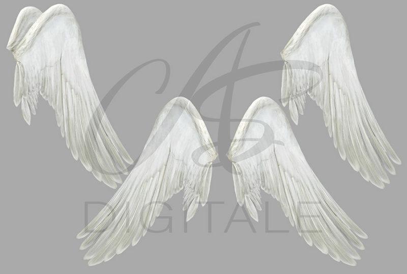skrzydła-labedzia-aniola-biale-czarne-nakladki-fotograficzne-photoshop-psd-png-edycja-zdjec-2