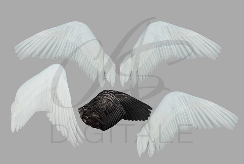 skrzydła-labedzia-aniola-biale-czarne-nakladki-fotograficzne-photoshop-psd-png-edycja-zdjec-3