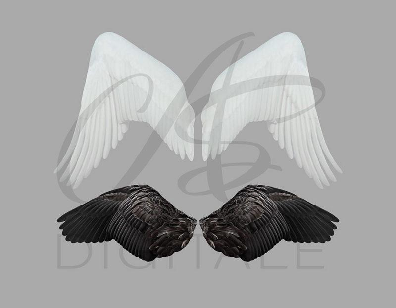 skrzydła-labedzia-aniola-biale-czarne-nakladki-fotograficzne-photoshop-psd-png-edycja-zdjec-4