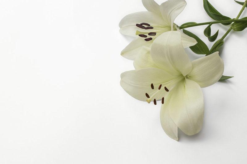 kolorowe-kwiaty-zdjecia-stockowe-darmowe-pobierz-1