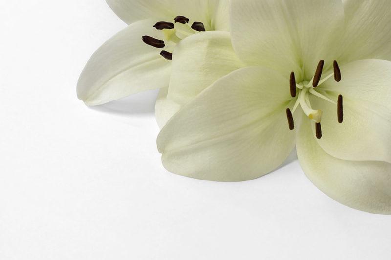 kolorowe-kwiaty-zdjecia-stockowe-darmowe-pobierz-2