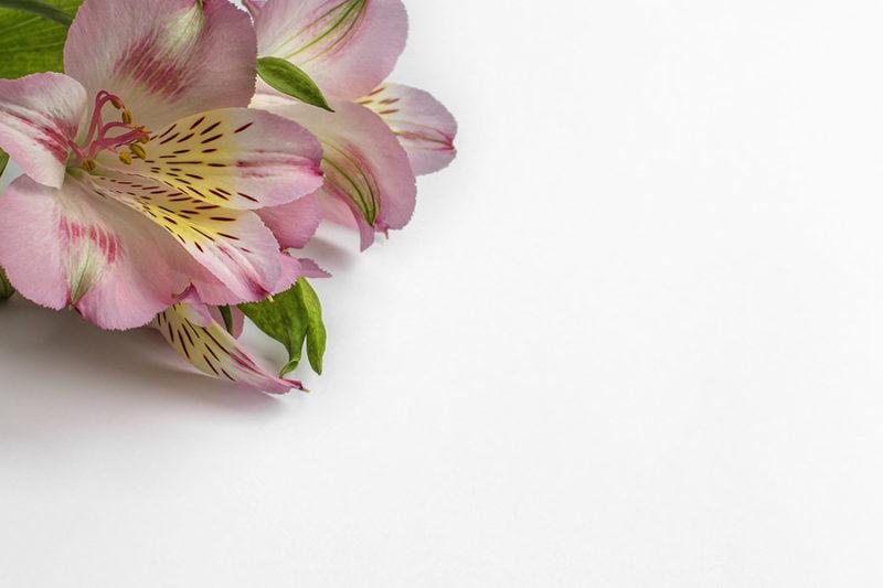 kolorowe-kwiaty-zdjecia-stockowe-darmowe-pobierz-3