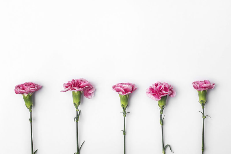 kolorowe-kwiaty-zdjecia-stockowe-darmowe-pobierz-4