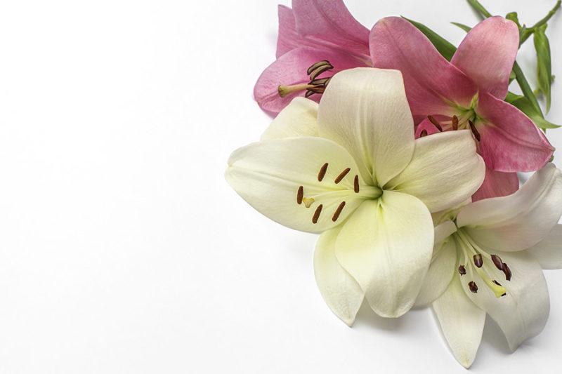 kolorowe-kwiaty-zdjecia-stockowe-darmowe-pobierz-5