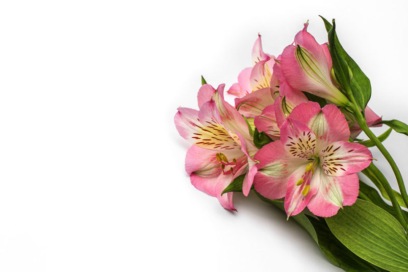 kolorowe-kwiaty-zdjecia-stockowe-darmowe-pobierz-6